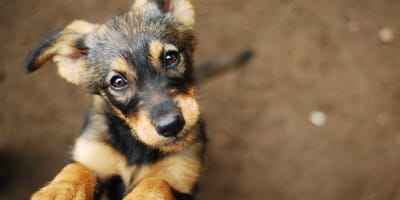 Understanding your dog's behaviour: important tips and advice