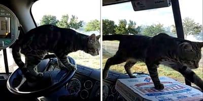 El gatito en un camión