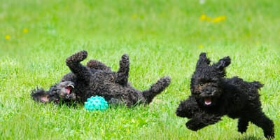 5 best puppy exercises for your new pet