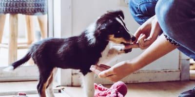 6 tricks to teach a puppy