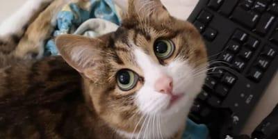 gatto con tastiera di pc