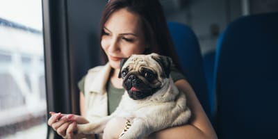 Is it possible to take a dog on a train?