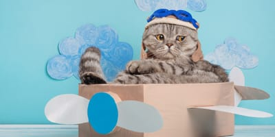Cómo viajar en avión con un gato: precio, normas y consejos
