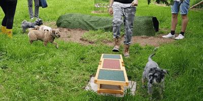 Dog adventure park opens in England's northwest, fun ensues