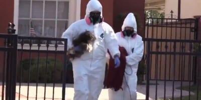 136 psów uratowanych! Żyły w skrajnie trudnych warunkach