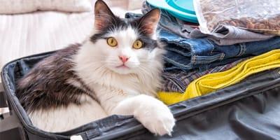Wyjazd z kotem na wakacje – czy to możliwe?