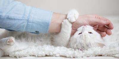 Tierische Zuneigung: Was bedeuten Liebesbisse von Katzen?