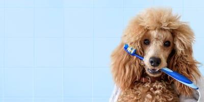 Cómo cuidar los dientes de mi perro para evitar enfermedades