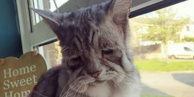 Cat with Ehlers-Danlos syndrome finds his forever home