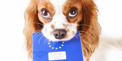 Pasaporte para mi perro: cuándo y dónde sacarlo, precio y recomendaciones