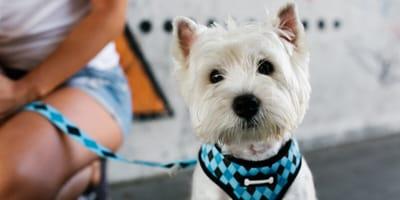 Collar o arnés para perro: ¿cuál comprar?