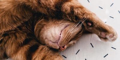New York bans cat declawing