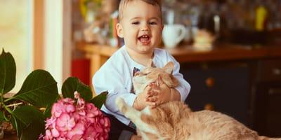 gato con bebé y madre