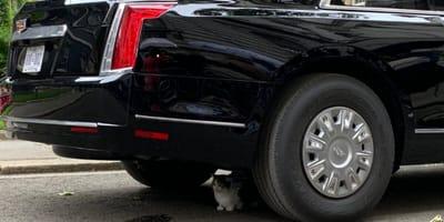 Larry the cat hides under Donald Trump's car
