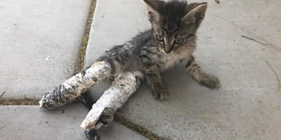 Abandoned kitten has legs in casts