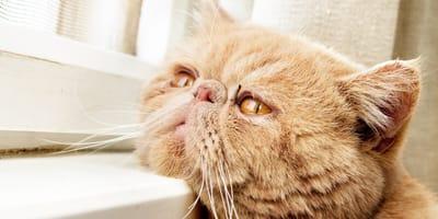 Curar sarna en gatos