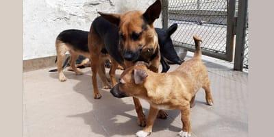 To, co przeszła Luna, bohaterska psia mama ze Szczytna sprawia, że serce się kraje