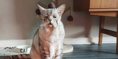 gatto con sguardo da compassione