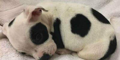 Sie findet einen ausgesetzten Hund. Beim Tierarzt wird sie wie vom Blitz getroffen!