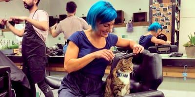 Ten kot od 4 lat pracuje w salonie fryzjerskim i ma tam ważną misję do wykonania