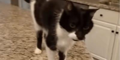 gatto-nero-e-bianco