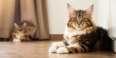 Co zrobić z kotem podczas wakacyjnych wyjazdów?