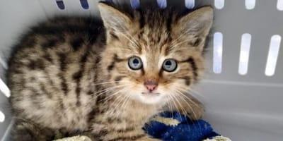 Frau nimmt süßes Kätzchen auf: Erst die Polizei öffnet ihr die Augen!