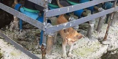 gatito hambriento
