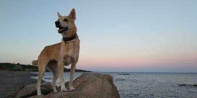 Las 7 razones por las que adoptar un perro merece la pena