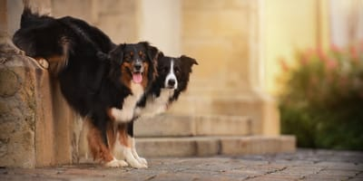 Everything to know about dog behaviour problems: the pet parent guide!