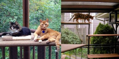 Catio Space mean indoor cats can go outdoors this summer