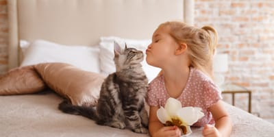 Top 10 of the best cats for kids
