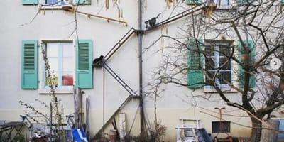 Cat ladders are popular in Bern