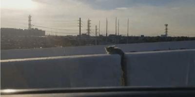 Katze auf Autobahn