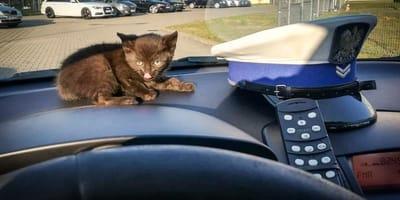 Policjanci drogówki uratowali kotka. Nie zgadniecie, gdzie go znaleźli