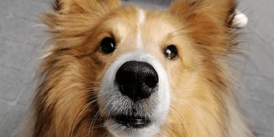 Capacidad olfativa de los perros