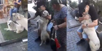 After their dog was dog-napped, the IMPOSSIBLE happened