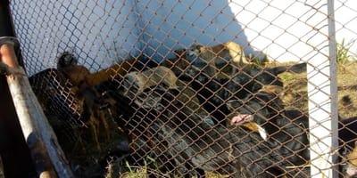 Salen a la luz las imágenes de las terribles condiciones en las que la Escuela del Ejército tiene a los perros
