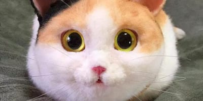 Der Blick ist wie bei einer echten Katze