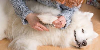 Cómo cortar las uñas a un perro en casa