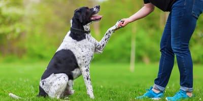 Pozytywne szkolenie psów – poznaj podstawowe zasady