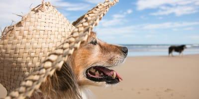 Czy psy się pocą? Termoregulacja u psów