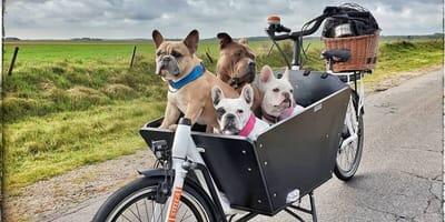 Holländisches Inselflair: Urlaub mit Hund auf Texel