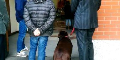Labrador Pavel przed kościołem