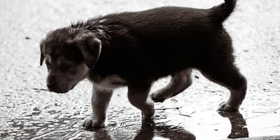 cucciolo-sotto-la-pioggia