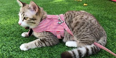 ¡5 consejos para pasear con tu gato por la calle!