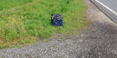 Dead cat left in garbage bag on side of a road