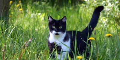 An end to severe cat allergies is in sight