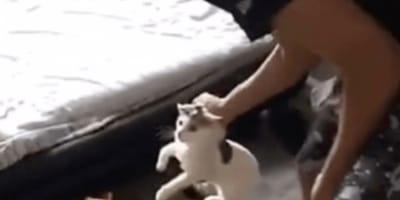 gatto-afferrato-dal-collo