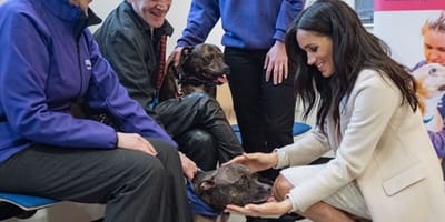 Meghan Markle pets rescue dog at Mayhew centre
